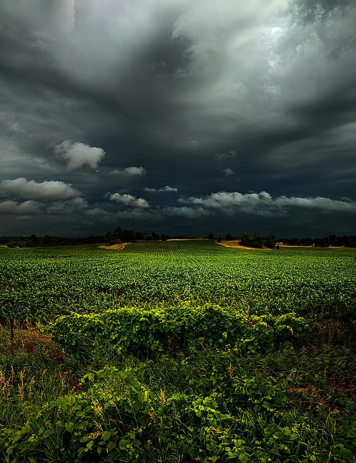 Rain Photograph by Phil Koch