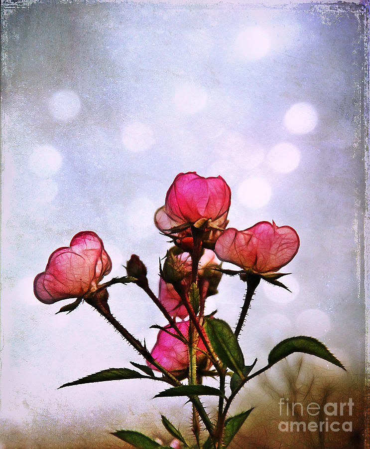 Rose Photograph - Reaching For The Light by Judi Bagwell