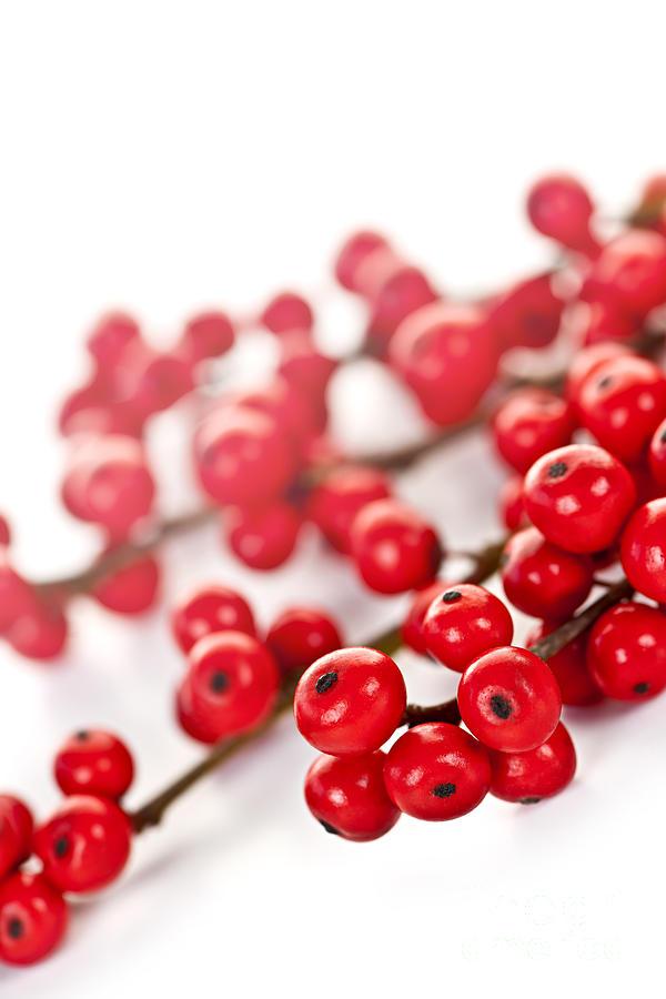 Berries Photograph - Red Christmas Berries by Elena Elisseeva