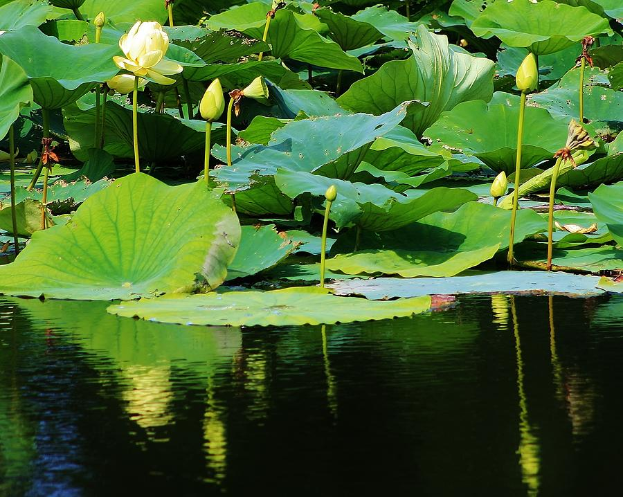 Flora Photograph - Reflecting Waters by Bruce Bley