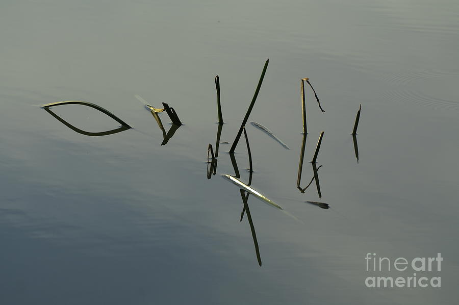Nature Photograph - Reflection by Odon Czintos