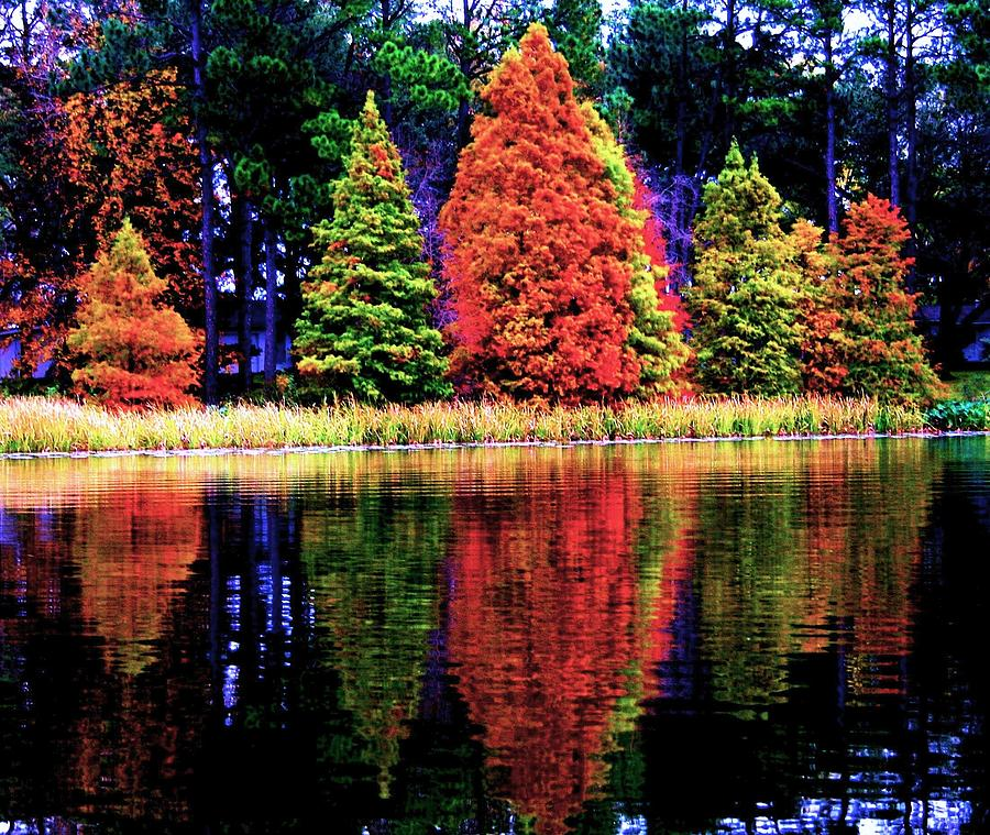 Trees Digital Art - Reflections by Carrie OBrien Sibley