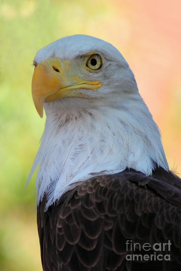 Raptor Photograph - Regal Eagle by Linda Eshom