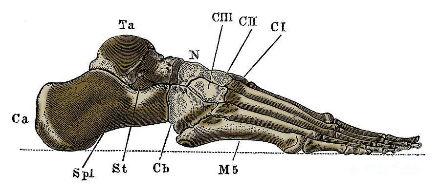 Human Photograph - Right Foot by Science Source