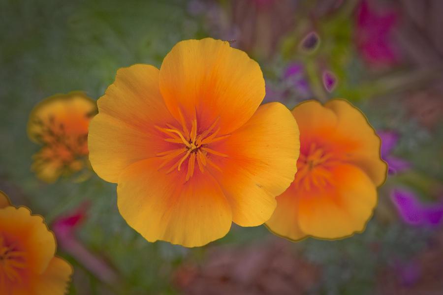Golden Poppy Photograph - Rikis Poppy 3 by G Wigler