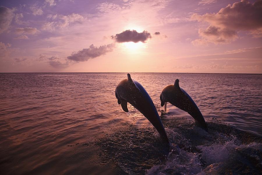 Bay Islands Photograph - Roatan, Bay Islands, Honduras Two by Stuart Westmorland