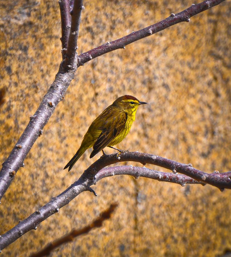Bird Photograph - Rockport Park by Erica McLellan