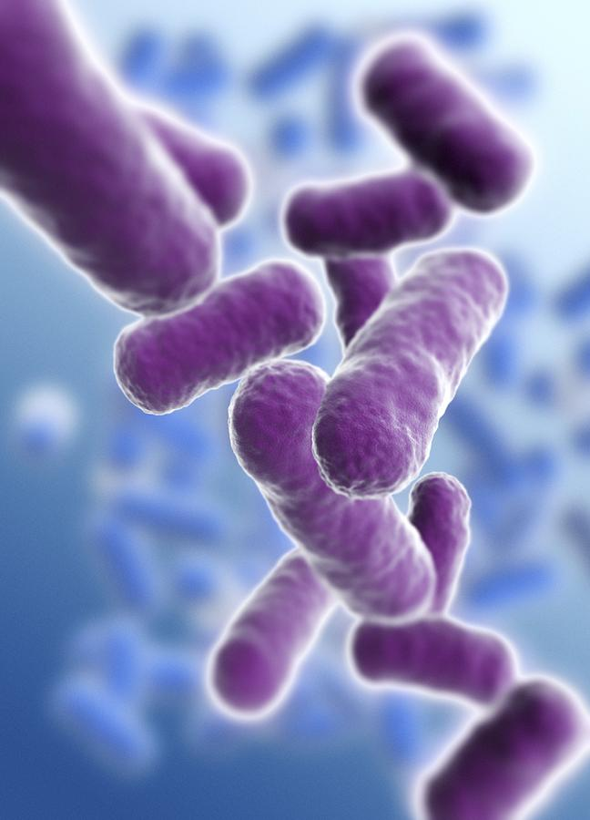 rod shaped bacillus bacteria photograph by pasieka