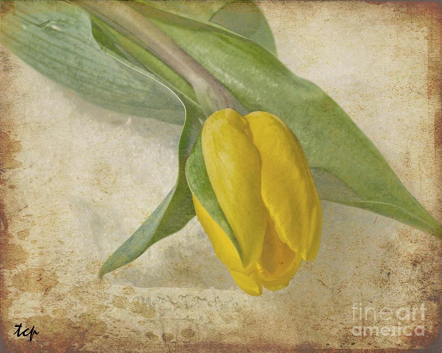 Flower Photograph - Romance by Traci Cottingham