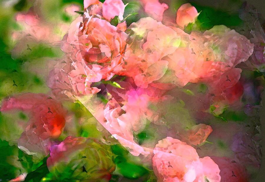 Floral Photograph - Rose 142 by Pamela Cooper