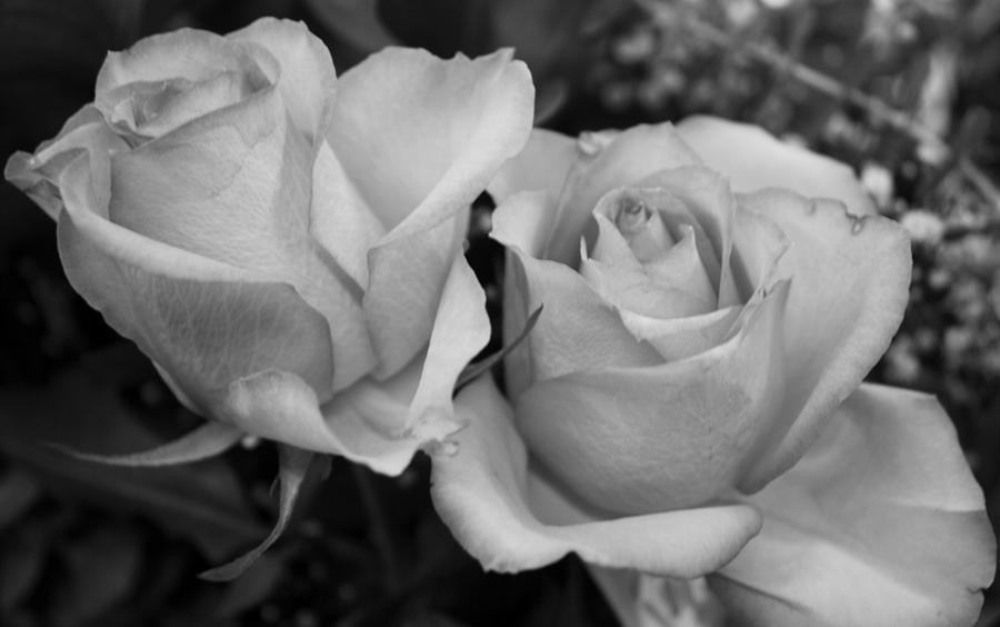 Flora photograph roses in black and white by bruce bley