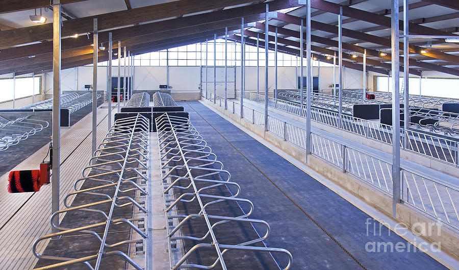 Row Of Cattle Cubicles Photograph By Jaak Nilson