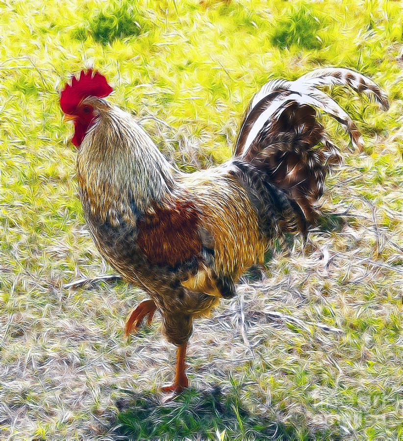 Rugged Rooster II by Sheila Laurens