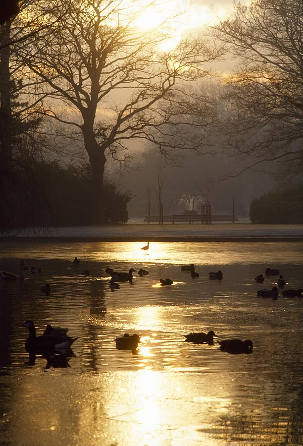Back Lit Photograph - Saint Stephens Green, Dublin, Co by The Irish Image Collection