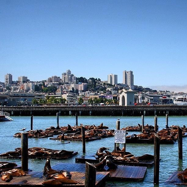 Beautiful Photograph - San Francisco by Luisa Azzolini