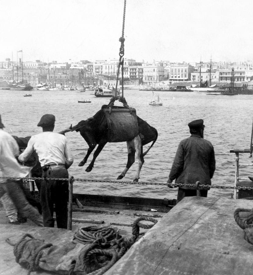 San Juan Photograph - San Juan Harbor - Puerto Rico - C 1900 by International  Images