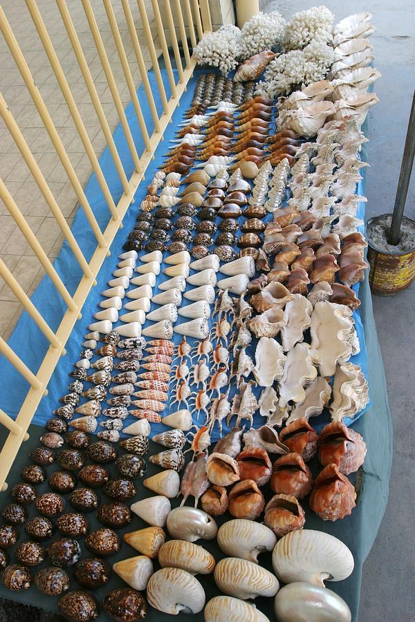 Seashell Photograph - Seashell Trade by Alexis Rosenfeld