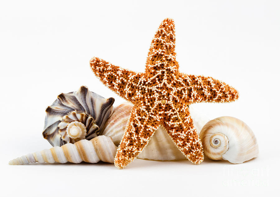 Seashells And A Starfish. Photograph by Dawna Moore