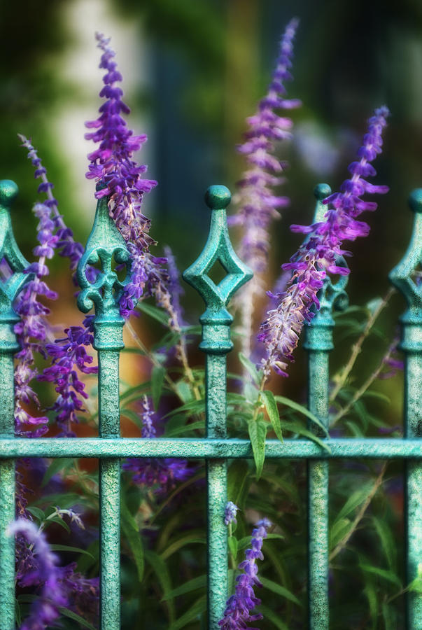 Lavender Photograph - Secret Garden by Brenda Bryant