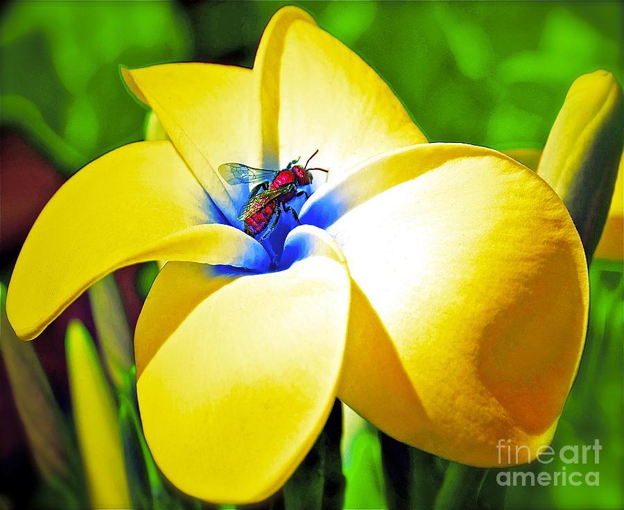 Yellow Photograph - Secrets by Gwyn Newcombe