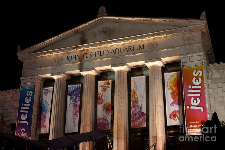 America Photograph - Shedd Aquarium With Jellyfish Exhibit by Paul Velgos