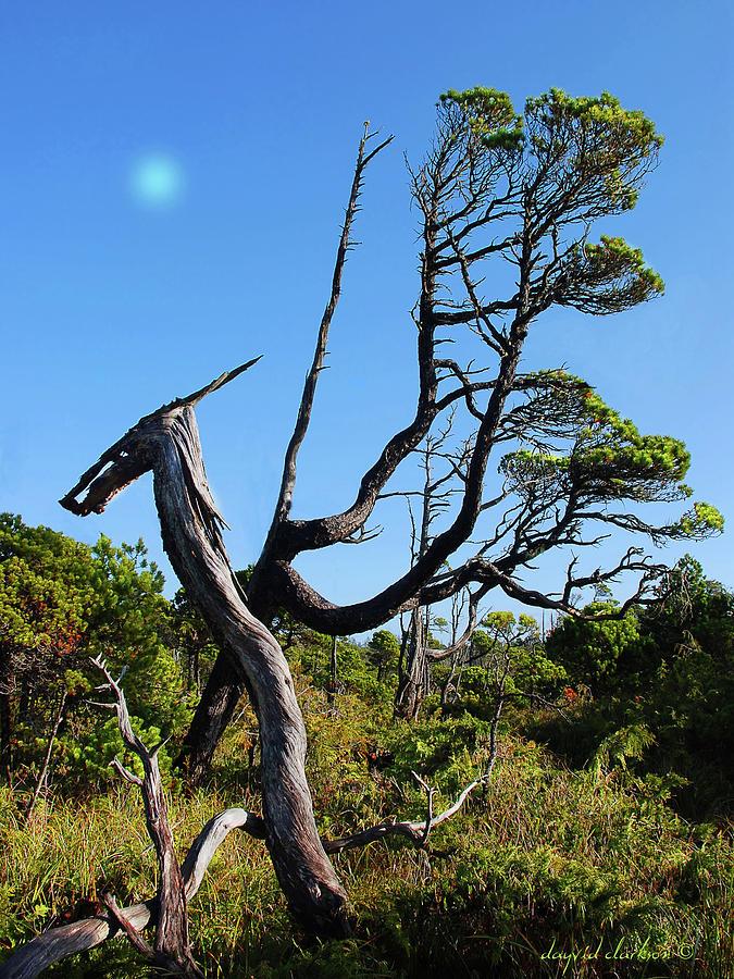 Bog Photograph - Shorepine Bog by Dayvid Clarkson