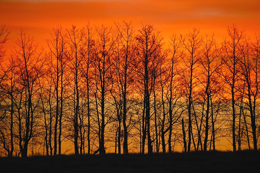 Horizontal Photograph - Silhouette Of Trees Against Sunset by Don Hammond