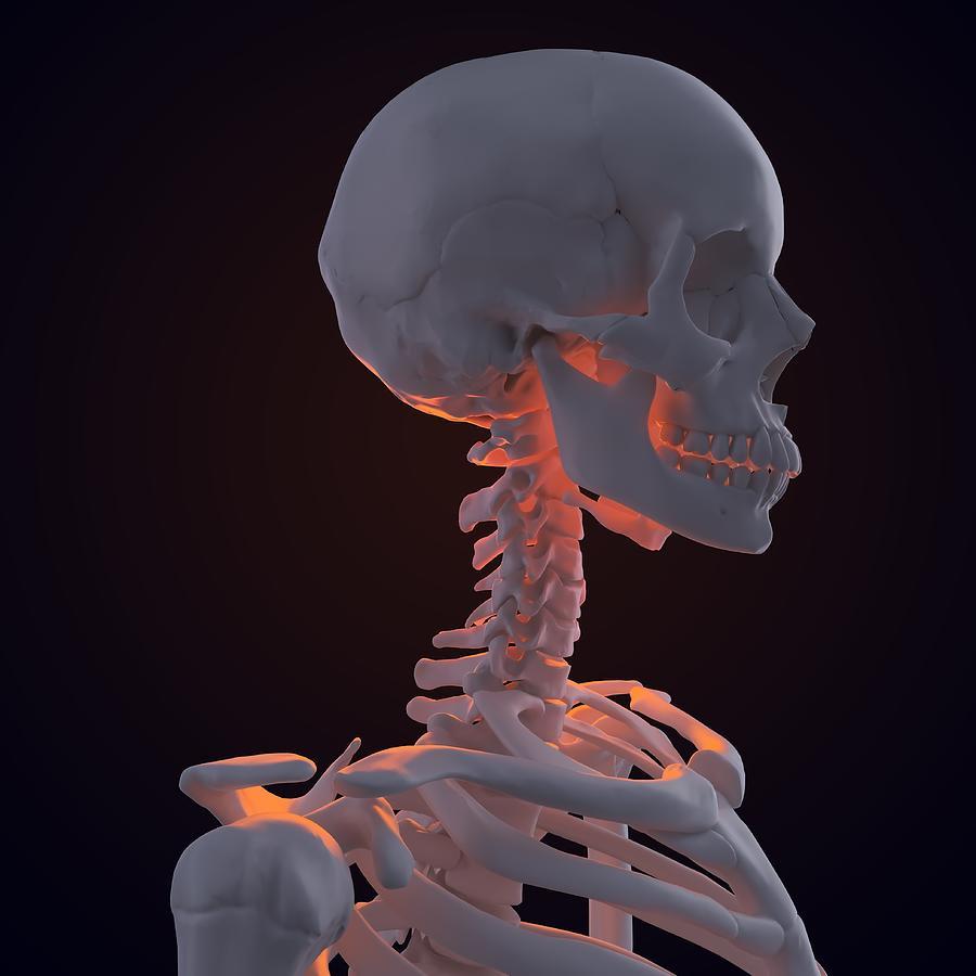 Square Digital Art - Skeleton, Artwork by Andrzej Wojcicki