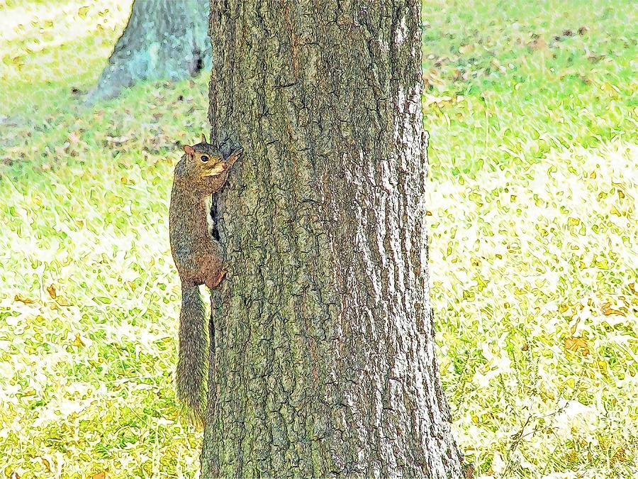 Croatia Photograph - Smiling Squirrel by Joseph Hendrix