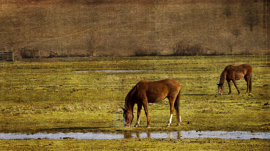 Horses Photograph - Snacking by Rebecca Cozart