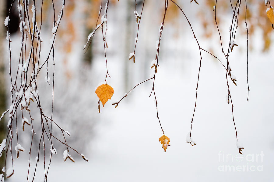 Autumn Photograph - Snowing In Autumn by Kati Finell