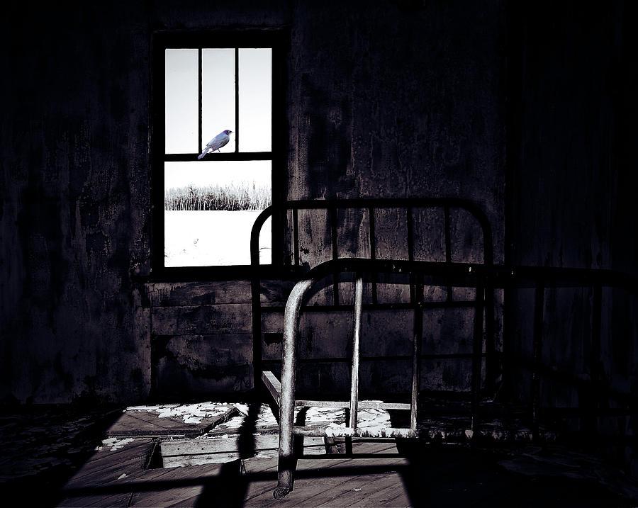 Justin Beiber Photograph - Song Bird by Jerry Cordeiro