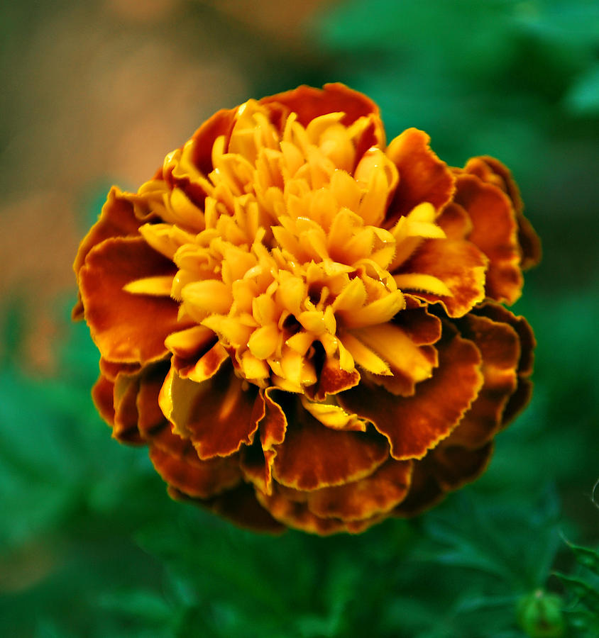 Orange Photograph - Spark by Michelle Cruz