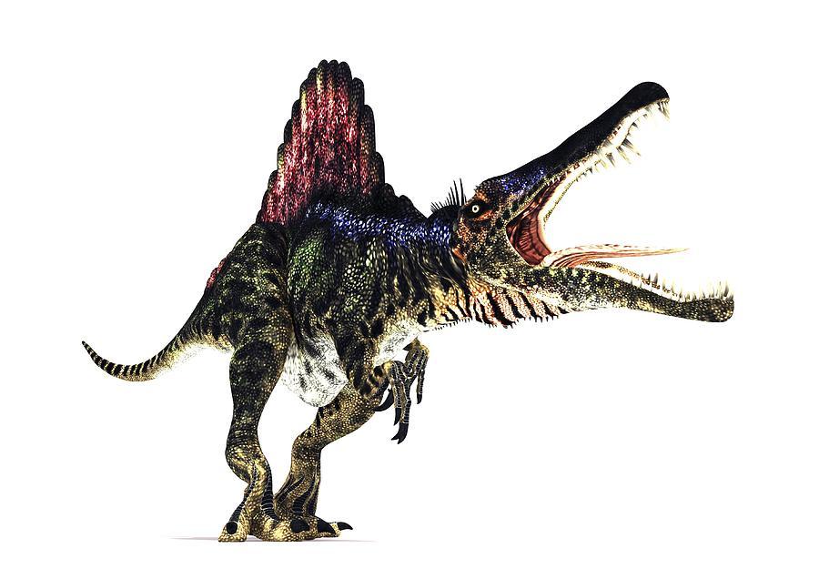 Spinosaurus Photograph - Spinosaurus Dinosaur, Artwork by Animate4.comscience Photo Libary