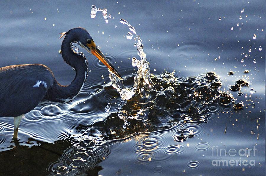 Splash Photograph - Splash by Bob Christopher
