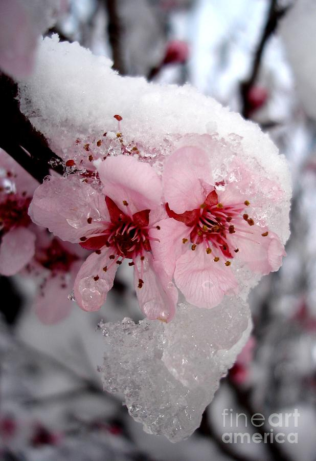 Spring Blossom Icicle by Kerri Mortenson