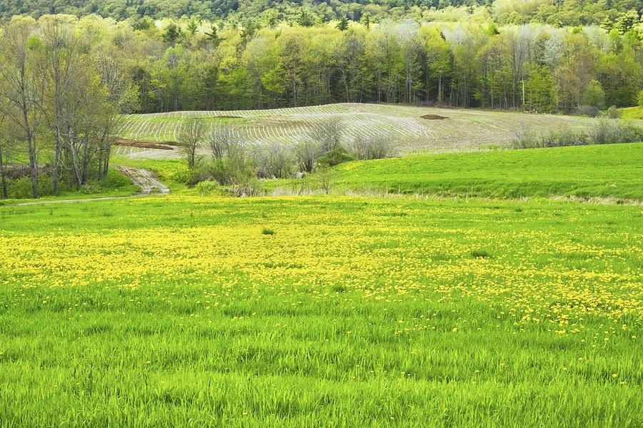 Maine Landscape Photograph - Spring Farm Landscape With Dandelion Bloom In Maine by Keith Webber Jr