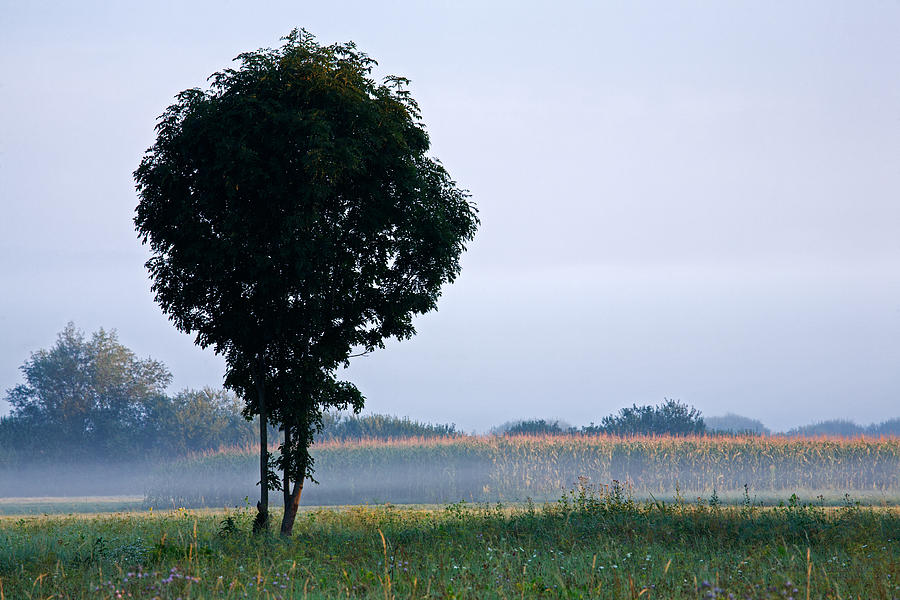 Tree Photograph - Standing Out From The Rest by Ian Middleton