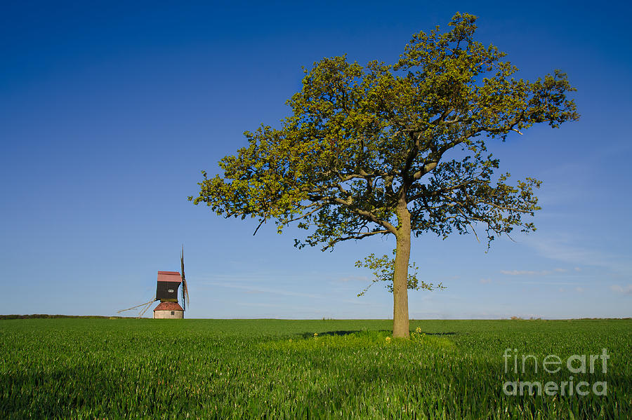 Windmill Photograph - Stevington Windmill by Radoslav Toth