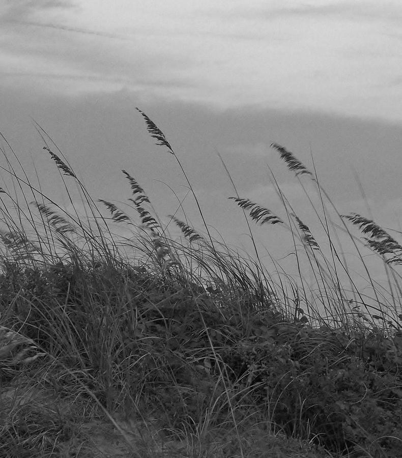 Black And White Photograph - Summer Fairwell by Stacy Sikes