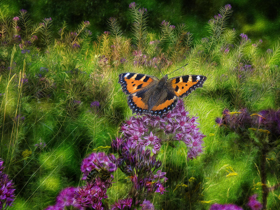 Butterfly Photograph - Summer Mood by Vladimir Kholostykh