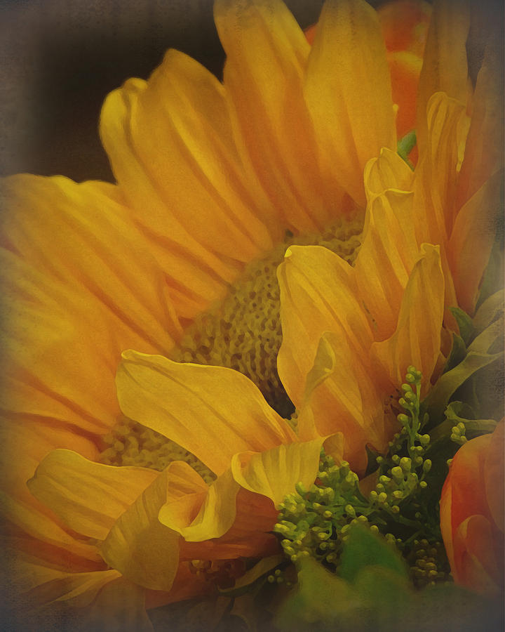 Sunflower Photograph - Sunflower by Terry Eve Tanner