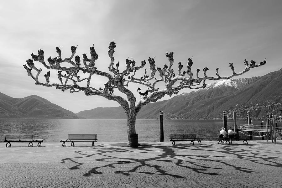 Tourism Photograph - sycamore trees in Ascona - Ticino by Joana Kruse