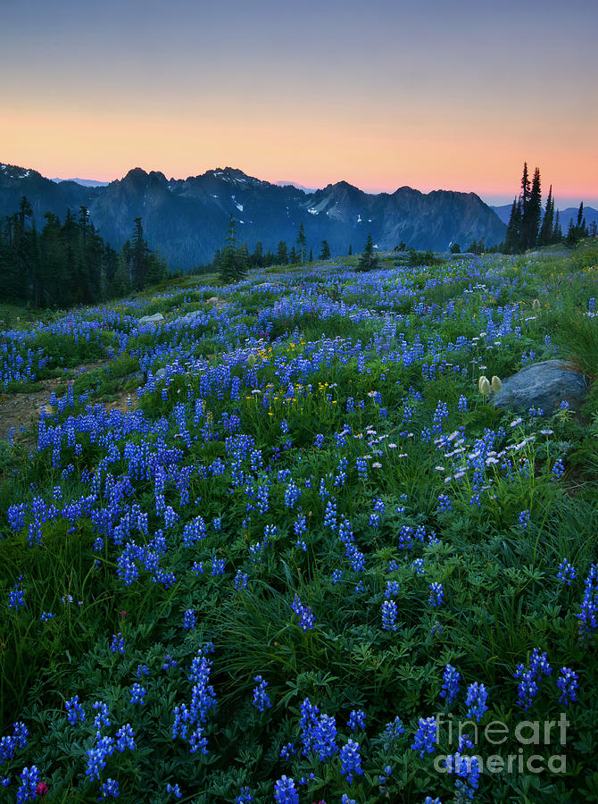 Tatoosh Photograph - Tatoosh Sunrise by Mike  Dawson