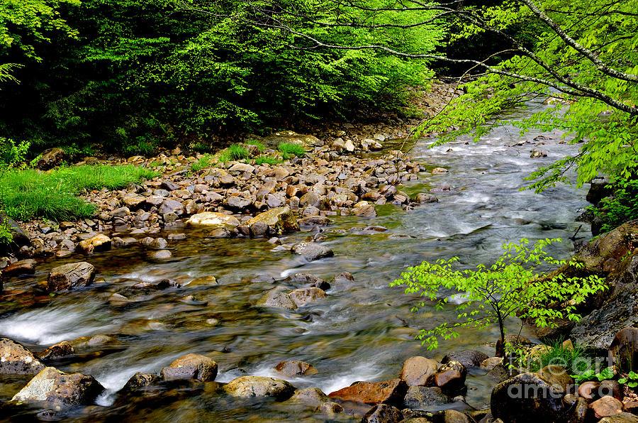 Usa Photograph - Tea Creek Monongahela National Forest by Thomas R Fletcher