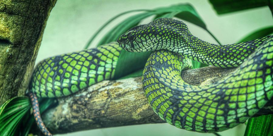 Denver Photograph - The Alert Green Snake by Noah Katz