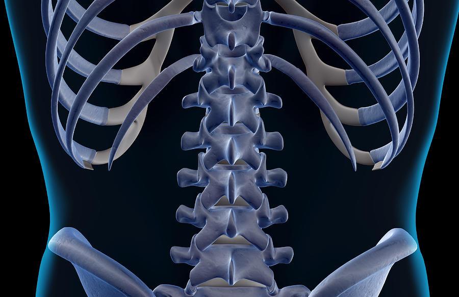 The Bones Of The Lower Back Digital Art By Medicalrf