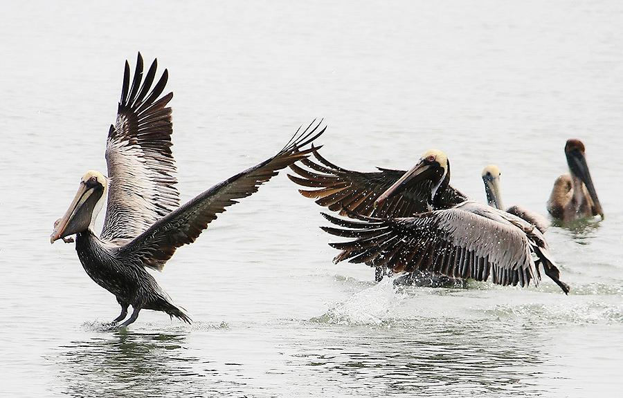 Murrells Inlet Photograph - The Chase by Paulette Thomas