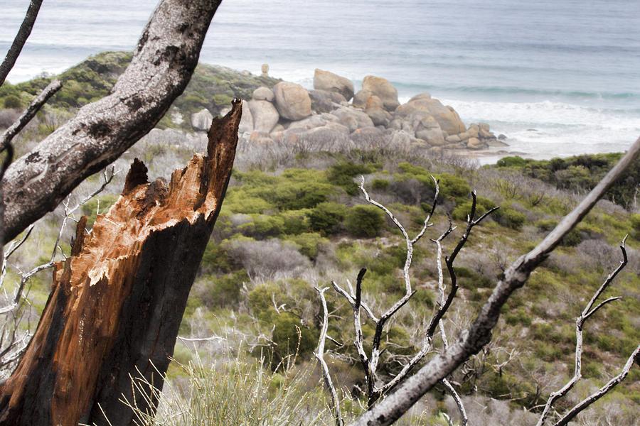 Tree Photograph - The Death Of A Tree V2 by Douglas Barnard