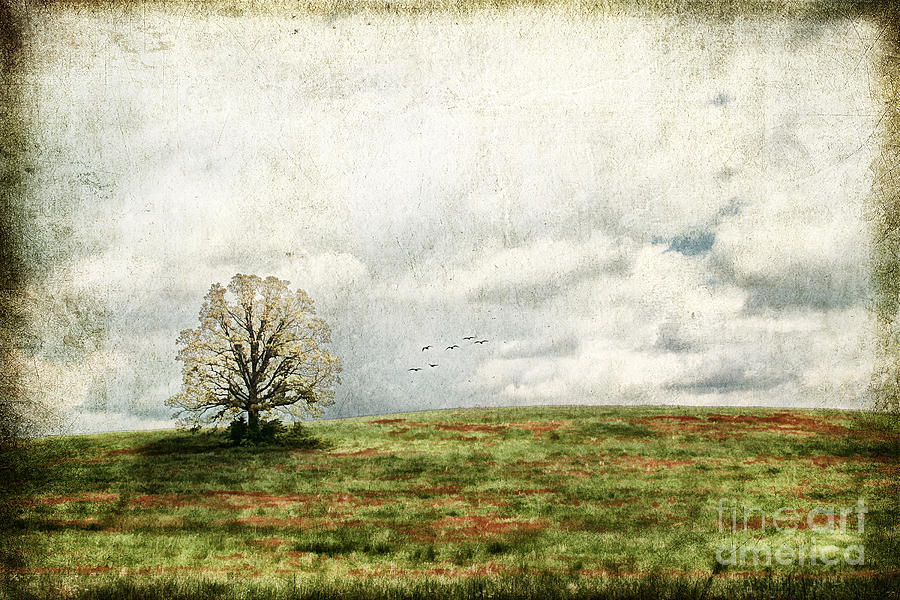 Aged Photograph - The Lone Tree by Darren Fisher